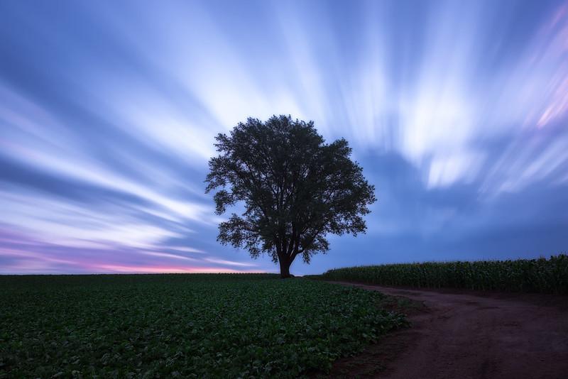 a tree standing alone in an empty field