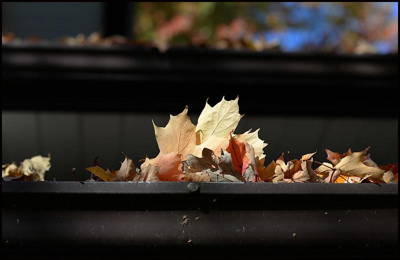 dry brown leaves