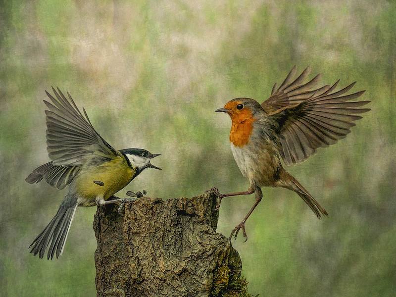 two birds flying and fighting over food