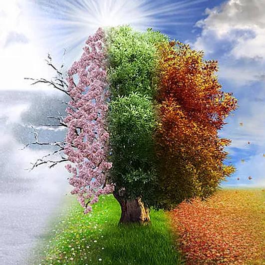 Seasons of Grief- Surviving Loss Retreat