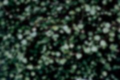 plant-690078_edited.jpg