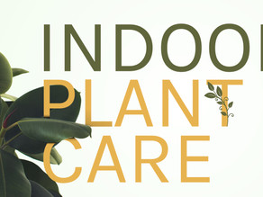 Campaign Spotlight: Indoor Plant Care Social Media Blitz