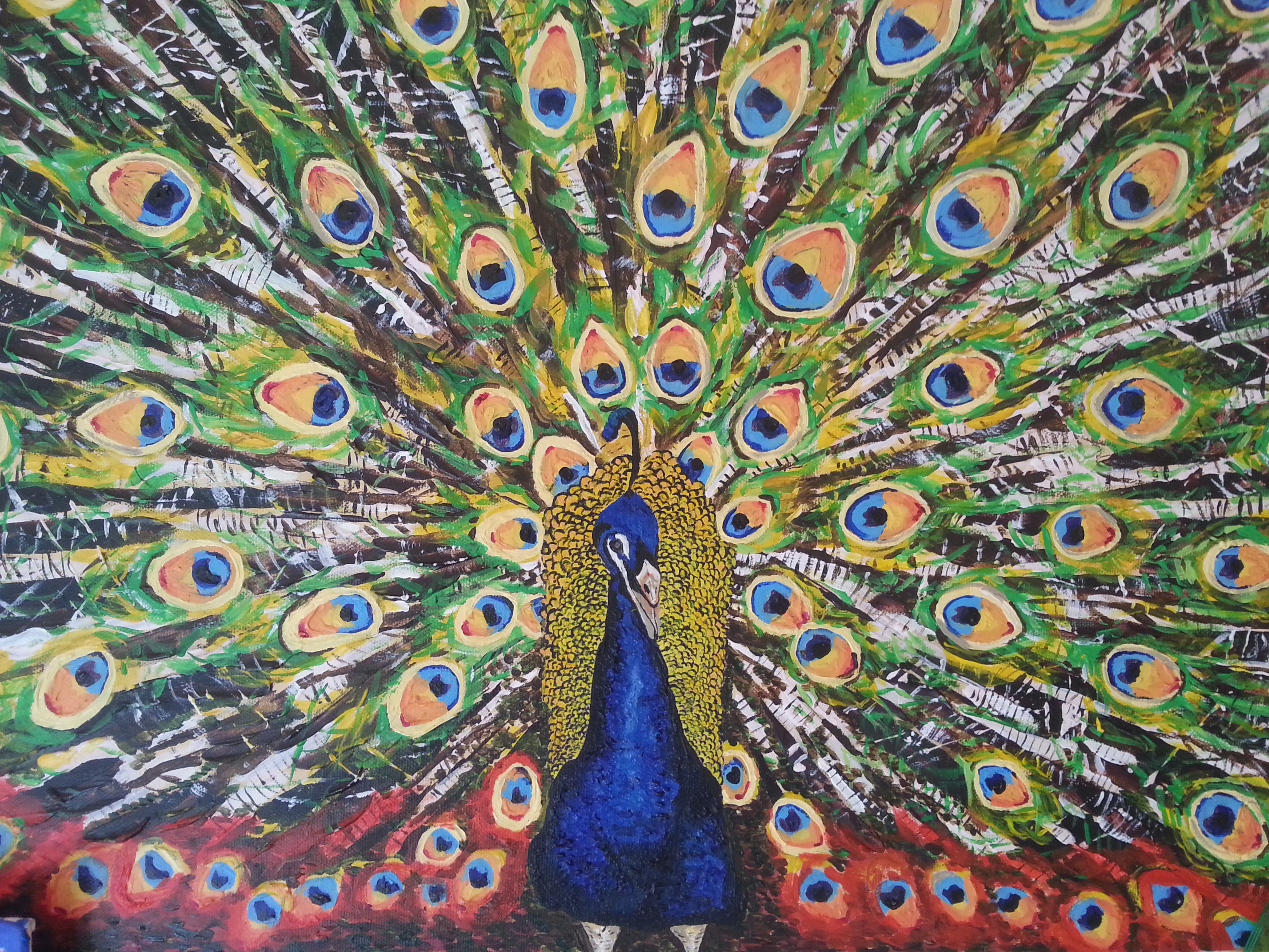 Peacock source google images.jpg