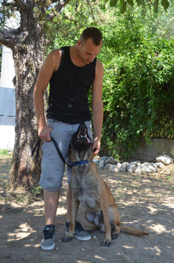 educateur canin 60, education chien