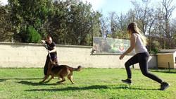 formation educateur canin, devenir e