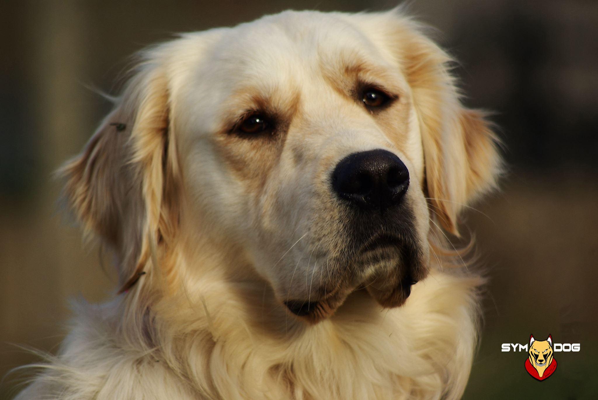 educateur canin 66, educateur canin