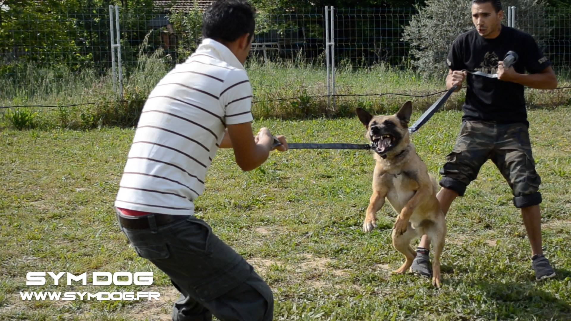 devenir educateur canin, avis symdog