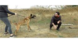 éducateur canin toulouse, educateur