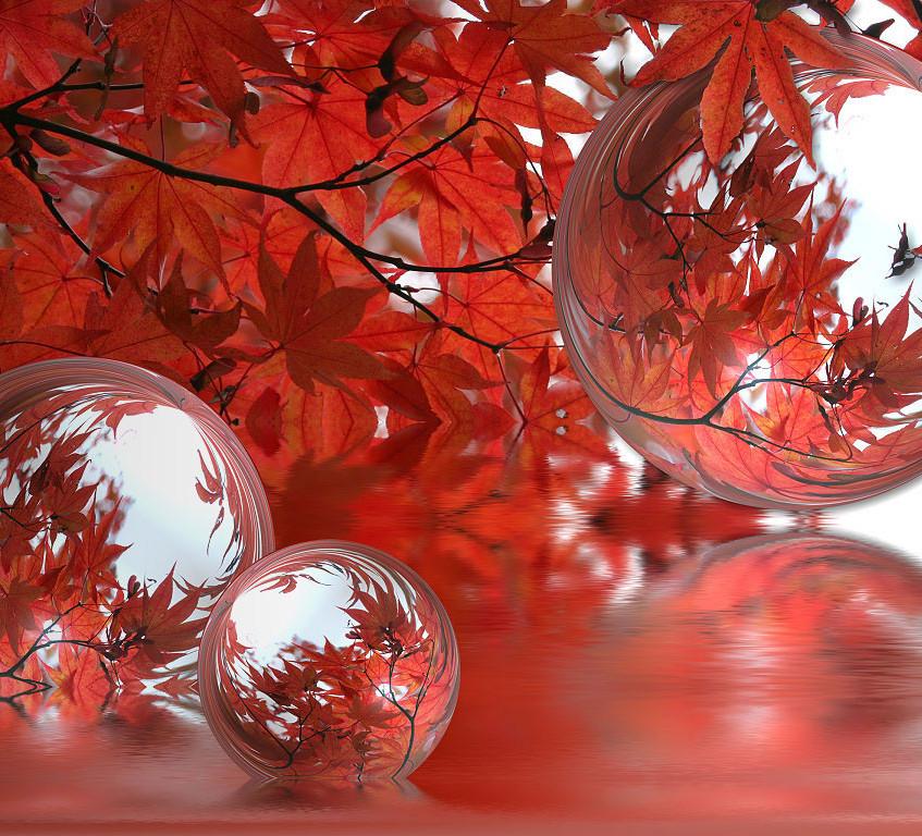 automne-23_jpg