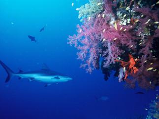 se os tubarões fossem homens – bertold brecht