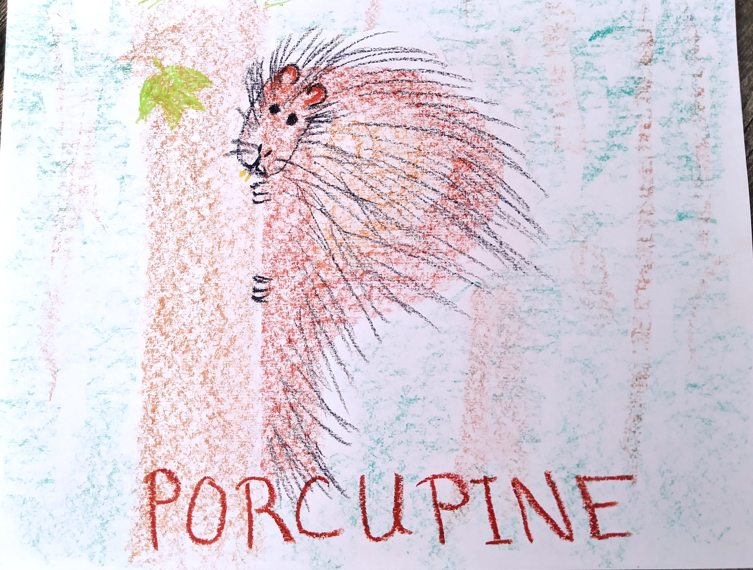 porcupine%203_edited