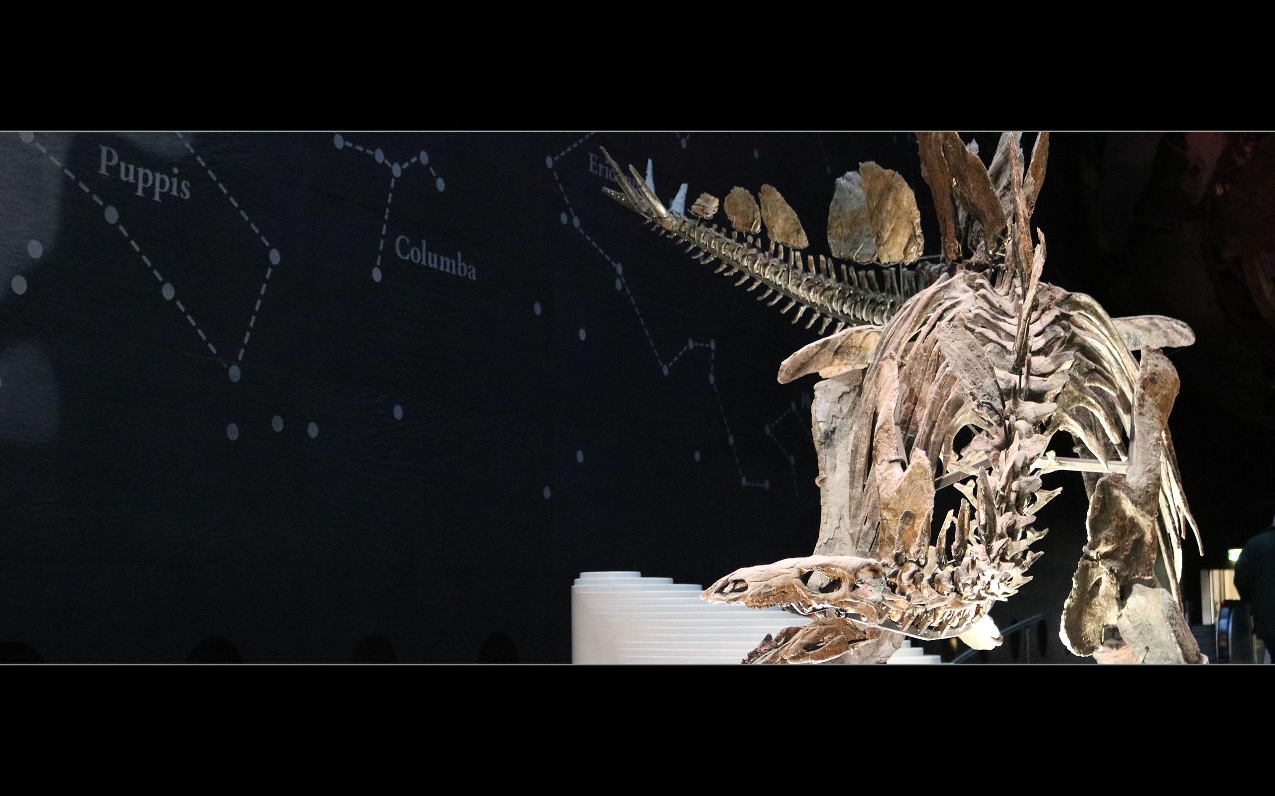 London Natural History Museum 1