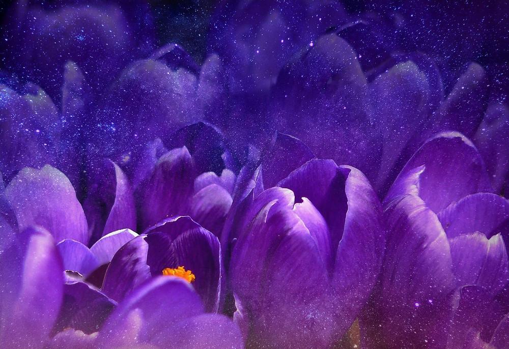 Ultra violet y la galaxia en su esencia