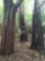 amazonia39.jpg