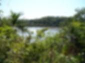 amazonia18.jpg