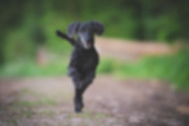 Sporthund.jpg