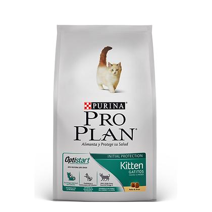 Pro plan kitten