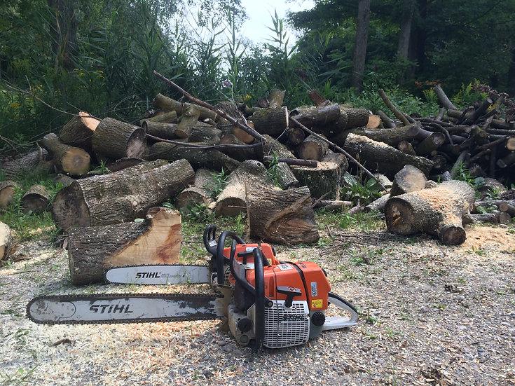 Stihl MS 660 Professional Chainsaw Daily Rental