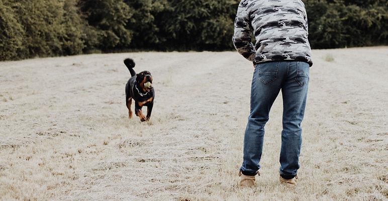Dog Training Camp CT