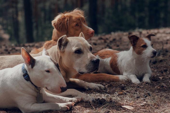 Dog Training Classes in CT