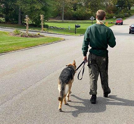 German Shepherd Trainer CT