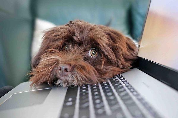laptop_dog.jpg