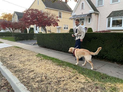Dog Behaviorist CT