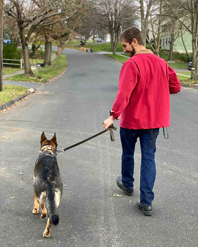 Private German Shepherd Training CT