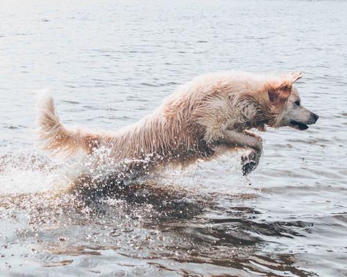 Dog Training Compo Beach CT