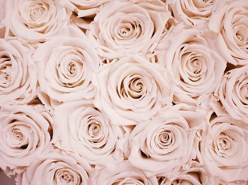 Community of Roses