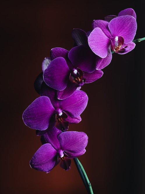 Climb Purple flower