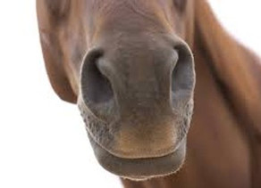 3 WAYS TO CONNECT WITH YOUR HORSE