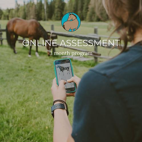 ONLINE ASSESSMENT - 3 MONTH PROGRAM