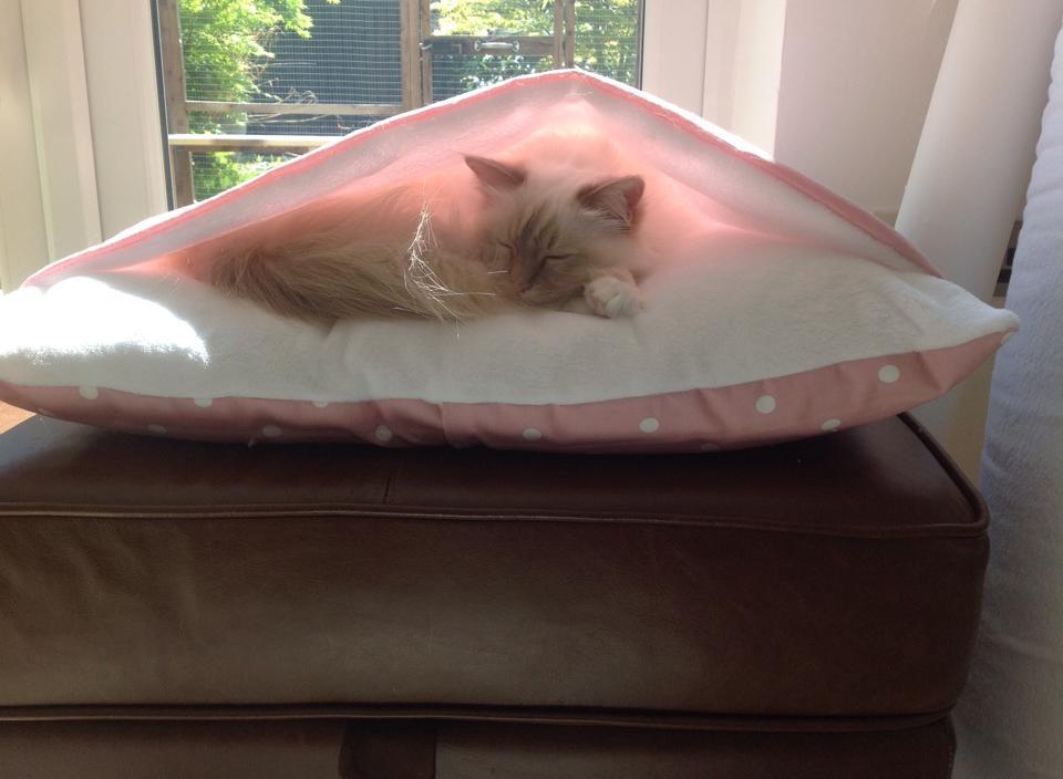 Pink Dotty/supersoft fleece