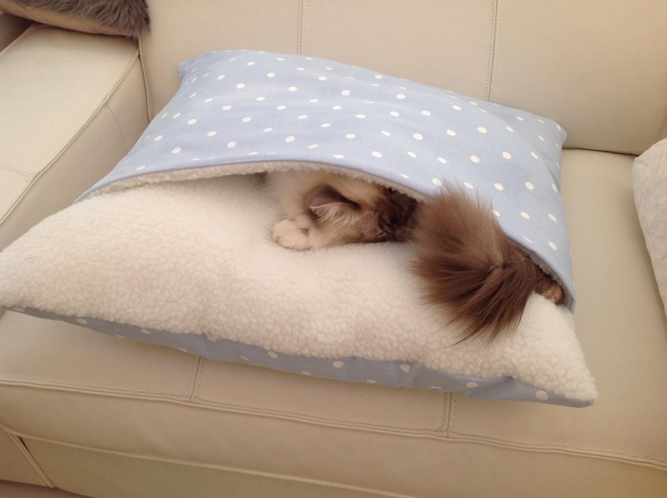 Blue Dotty Snuggle