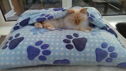 Paws snuggle Blue