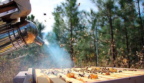 beekeeping-basics_Moosicorn-Ranch-Flickr