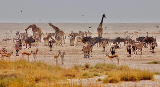 John Creedy | Namibia Etosha National Park