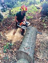 Team member Jane cutting log discs