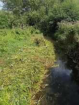 Reed control in a Kent river