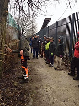 Hedge Laying Demonstration