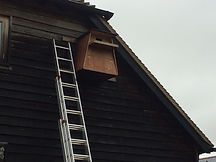 Barn Owl box installed in Guilford