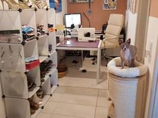 Katzen beim Arbeit