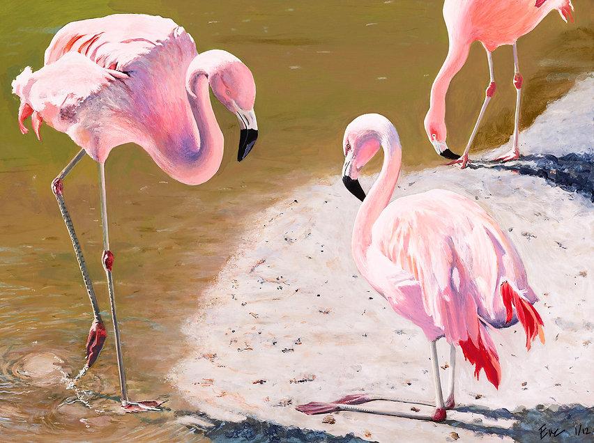 FlamingoWEB.jpg