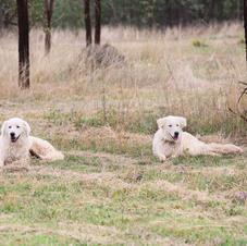 Hank and Holly on photo duty