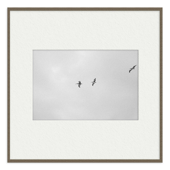 Trio de pássaros