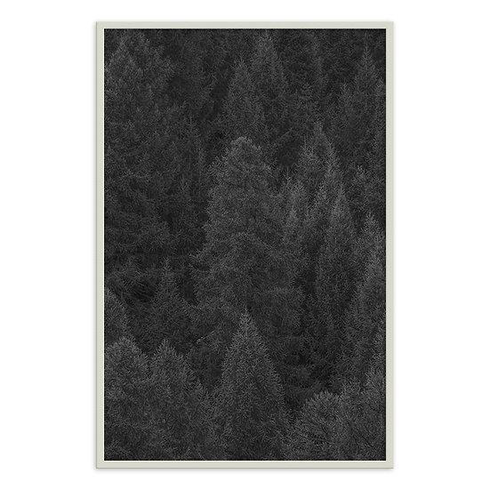 Árvores na montanha
