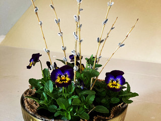 Violas ..a tiny might herb!