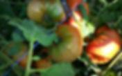 domaine_agricole_de_la_vallée.jpg