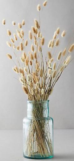 Lagurus dried flower